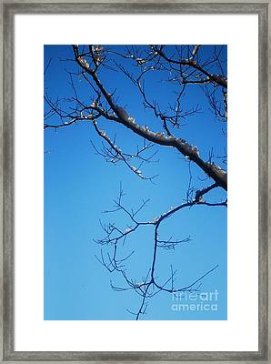 Glimmering Branches Framed Print by Susan Hernandez