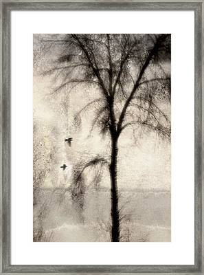 Glimpse Of A Coastal Pine Framed Print by Carol Leigh