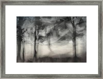 Glimpse Of Coastal Pines Framed Print by Carol Leigh