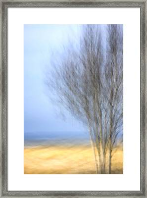 Glimpse Of Trees Sand And Beach Framed Print