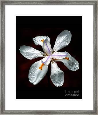 Glisten Framed Print by Angela Murray