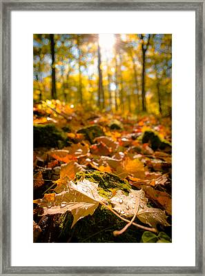 Framed Print featuring the photograph Glistening Autumn Dew by Mark David Zahn Photography