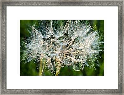 Glittering In The Grass Framed Print