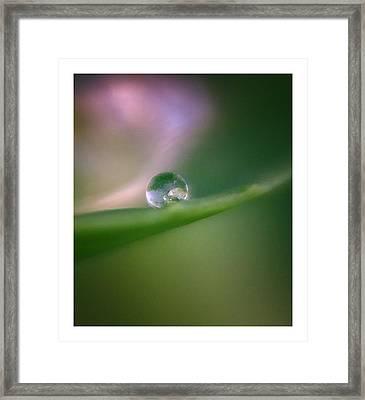 Global Warming Framed Print by Barbara Socor