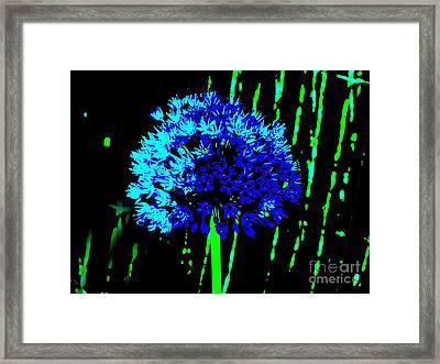 Framed Print featuring the photograph Globe Allium  by Sally Simon