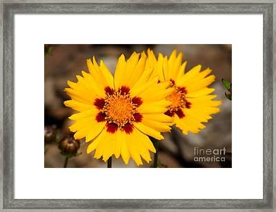 Gloden Flowers Framed Print