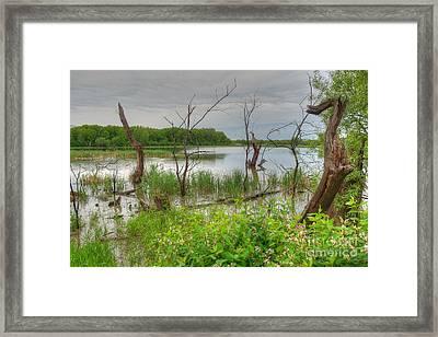 Gloomy Swamp Corner Framed Print