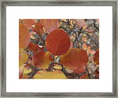 Glories Of Autumn Framed Print by James Rishel