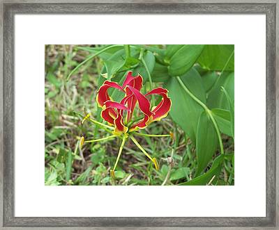 Framed Print featuring the photograph Gloriosa Lily by Michele Kaiser