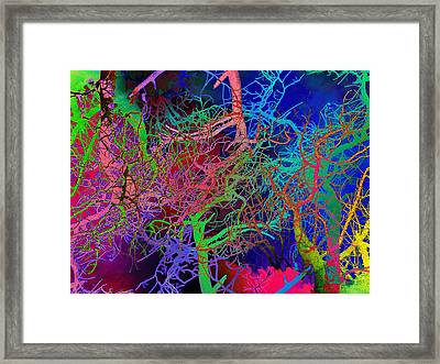Glorious Bare Trees Framed Print