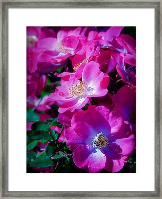 Glorious Blooms Framed Print