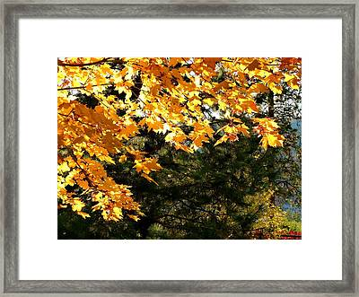 Glorious Fall Afternoon Framed Print by Will Borden