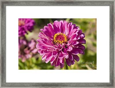 Glorious Flower Framed Print