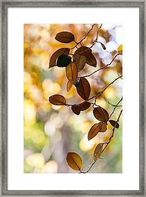 Glorious Foliage. Tree In Pamplemousse Garden 1. Mauritus Framed Print