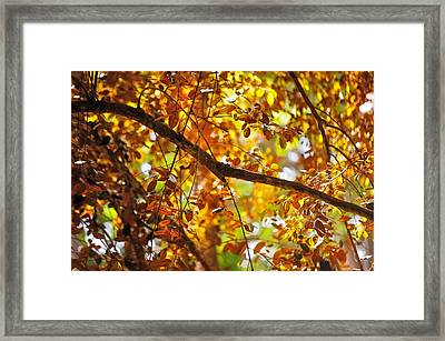 Glorious Foliage. Tree In Pamplemousse Garden. Mauritus Framed Print