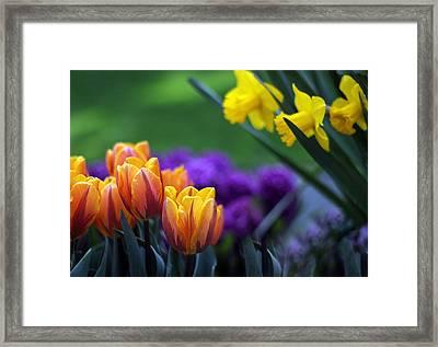 Glorious Garden Framed Print