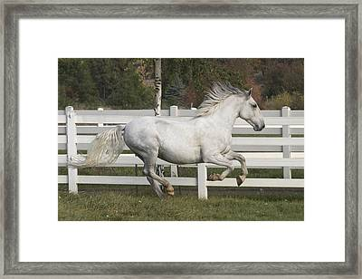 Glorious Gunther Framed Print by Wes and Dotty Weber