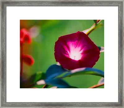 Glorious Morning Framed Print by Cynthia Syracuse