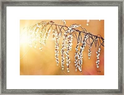 Glorious Morning Framed Print by Scott Pellegrin