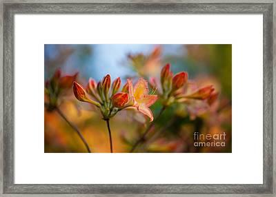 Glorious Orange Blooms Framed Print by Mike Reid