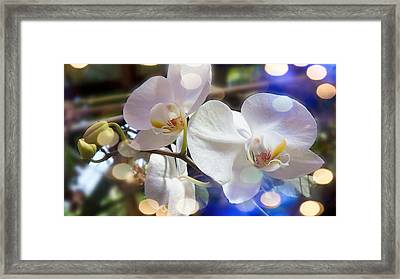 Glorious Orchids Framed Print