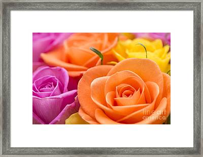 Glorious Roses Framed Print