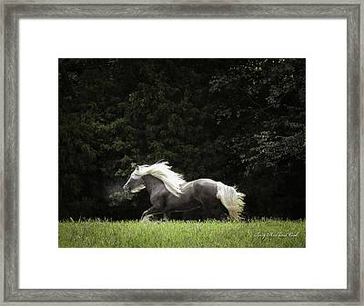 Glorious Silver Reign Framed Print by Terry Kirkland Cook