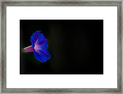 Glorious Simplicity Framed Print by Cheryl Baxter