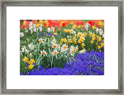 Glorious Spring Framed Print