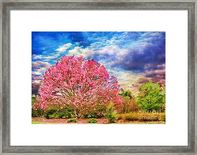 Glorious Spring Framed Print by Darren Fisher