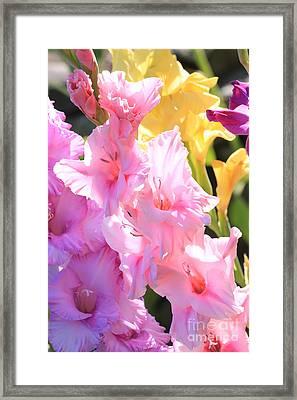 Glorious Summer Gladiolus Framed Print by Carol Groenen