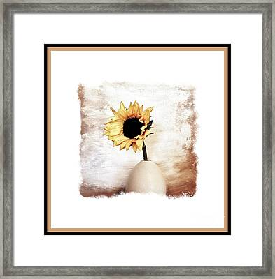 Glorious Sunflower Framed Print by Marsha Heiken