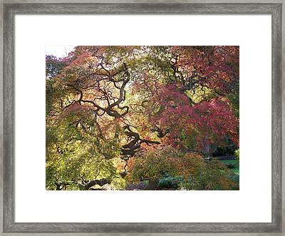 Glorious Tree In The Arboretum Framed Print by Rick Todaro