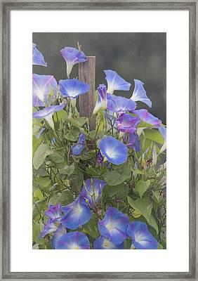 Glory In The Morning Framed Print by Kim Hojnacki