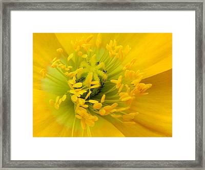 Framed Print featuring the photograph Glory Of Nature by Deb Halloran