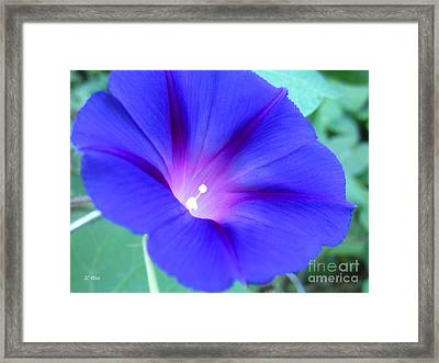 Glory Of The Morning 1 Framed Print