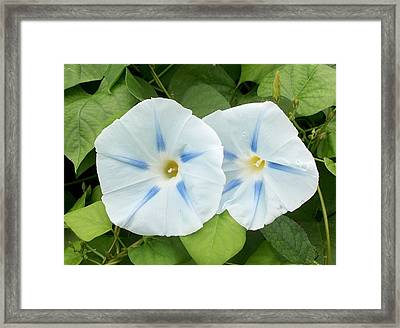 'glory Of The Morning' Framed Print