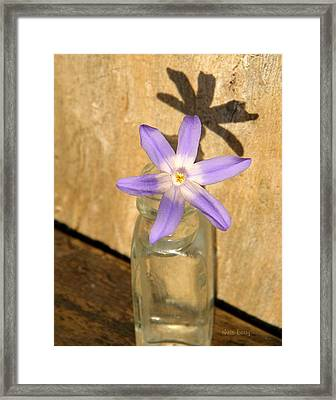 Glory Of The Snow In A Jar Framed Print by Chris Berry