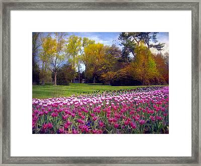 Glory Of Tulips Framed Print