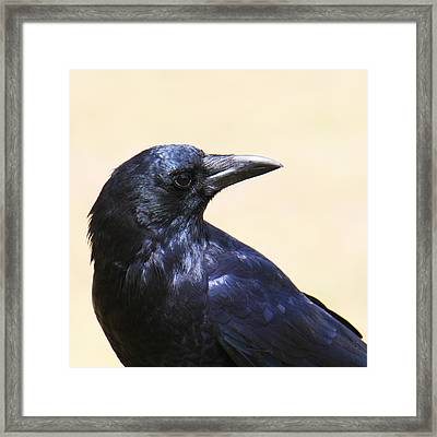 Glossy Crow Framed Print by Bob and Jan Shriner