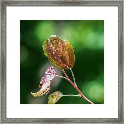 Glossy Nature - Featured 3 Framed Print by Alexander Senin