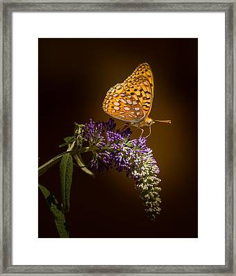 Glow Bug Framed Print by Janis Knight