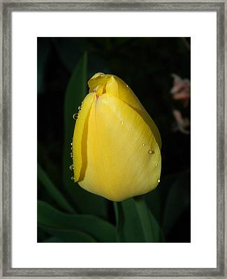 Glow In The Dark Framed Print by Terri Waselchuk