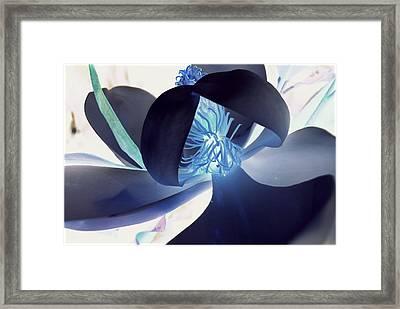 Blue Glow Magnolia Framed Print