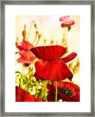 Morning Glow Framed Print by Chris Berry