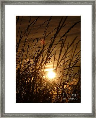 Glow Through The Grass Framed Print