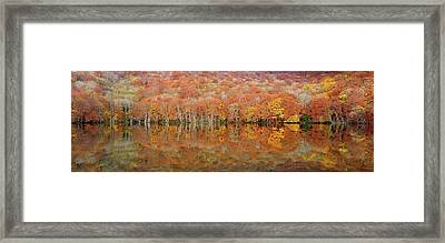 Glowing Autumn Framed Print by Sho Shibata