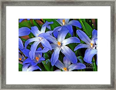 Glowing Blue Framed Print by Chris Anderson