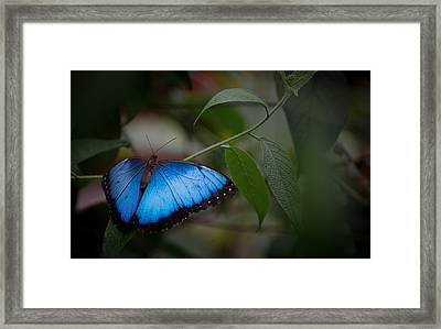 Glowing Blue Framed Print by Penny Lisowski
