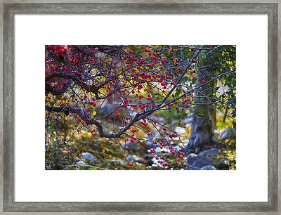 Glowing Branches Framed Print